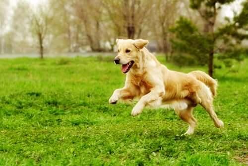 Fitness für dein Haustier, damit es in Form bleibt!