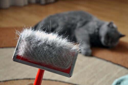 Haarballen durch Bürsten vermeiden