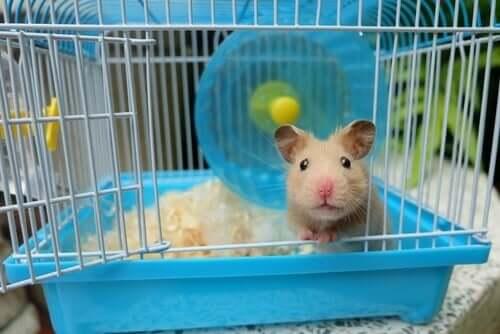 Hamsterkäfig sauber machen