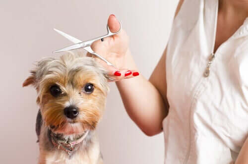 Hundefrisör werden: mit diesen 7 Tipps zum Erfolg