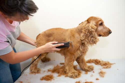 Hundefrisör werden