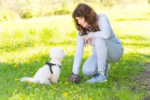 DNA-Datenbank, um Hundekot zu identifizieren
