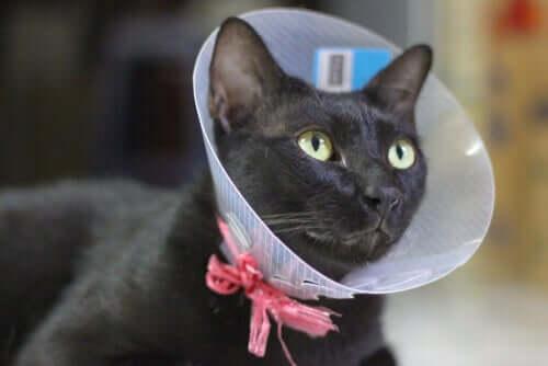 Kastration der Katze: wichtige Infos und Tipps