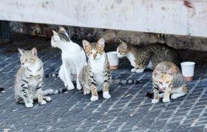 Mexiko Stadt plant Institut für Tierpflege