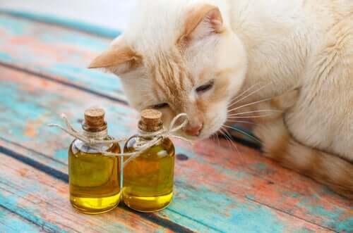 Olivenöl für die Katze