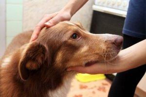 Sauberer Hund wird gestreichelt