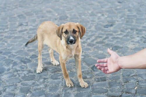Hand náhert sich einem Straßenhund an