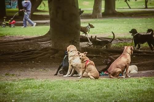 Streuner treffen sich im Stadtpark