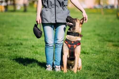 Therapiehund: Unterschied zu einem gut erzogenen Hund