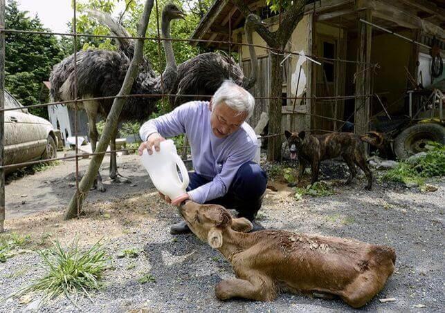 Tierpflege nach Atomkraftunfall
