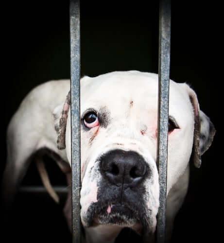 Tiermisshandlung