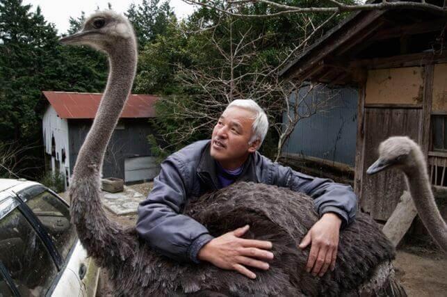 Tierpfleger mit Straussenvögeln