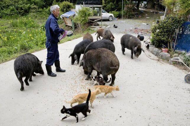 Der Tierpfleger von Fukushima