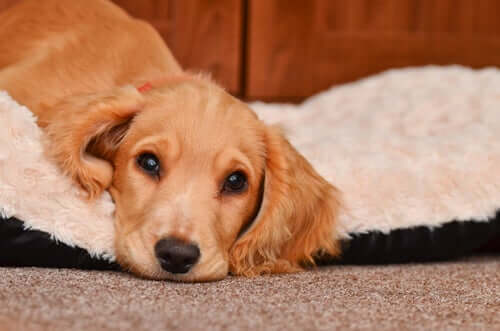 Vorsichtsmaßnahmen und Pflege beim Erbrechen von Hunden