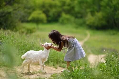 Eine Ziege halten, 4 Dinge, die du wissen solltest