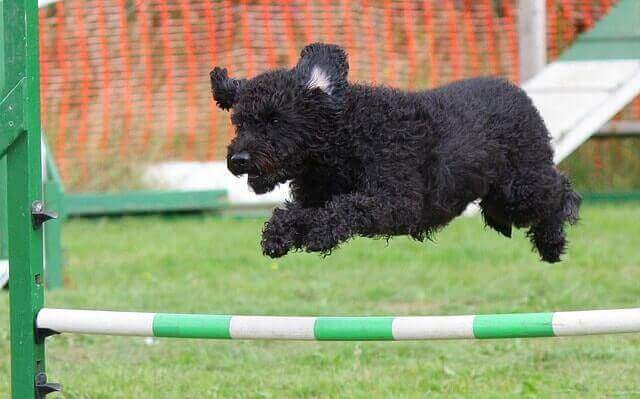 Hund macht Agility Training - Hundeverbände