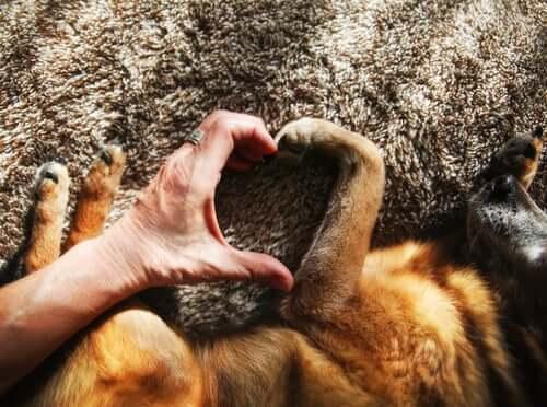 Ein Hund ist gut für deine Herz- und Gefäßgesundheit