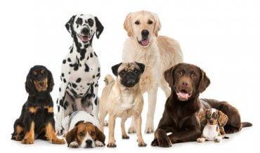 Die wichtigsten Hundeverbände der Welt