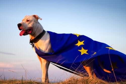 Tierrecht in Europa
