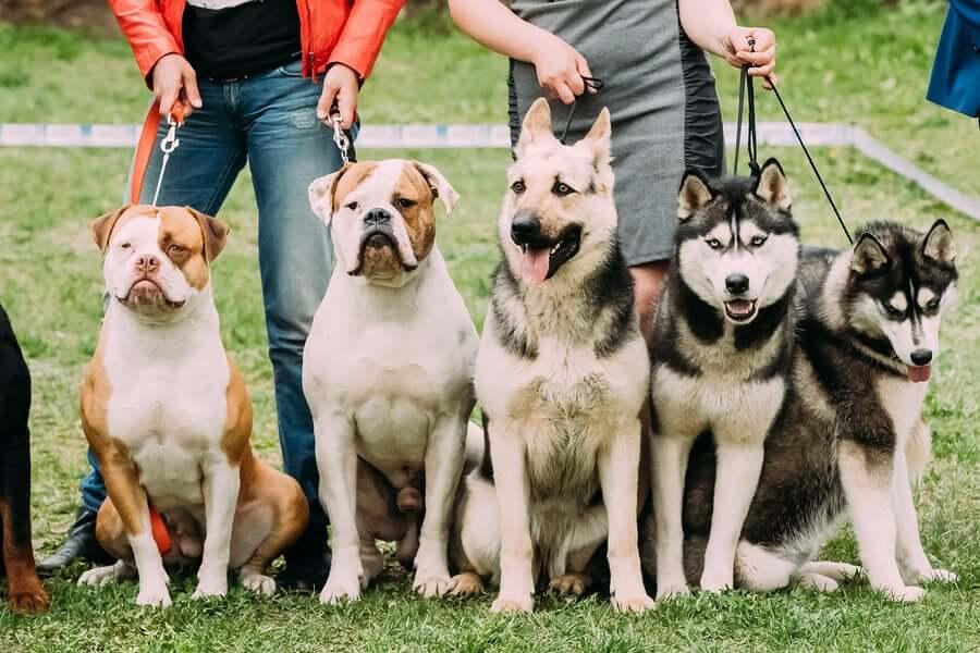 Verschiedene Hunderassen präsentieren sich - Hundeverbände