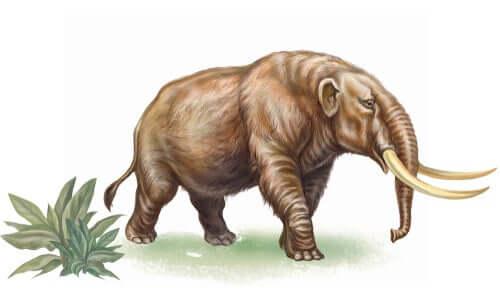 Entdecke die Geschichte der ausgestorbenen Mammutiden