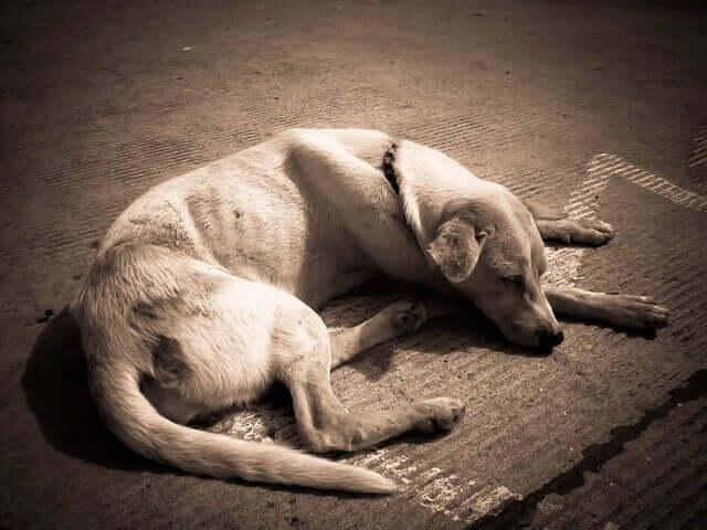 Dünner Hund liegt auf der Straße und schläft