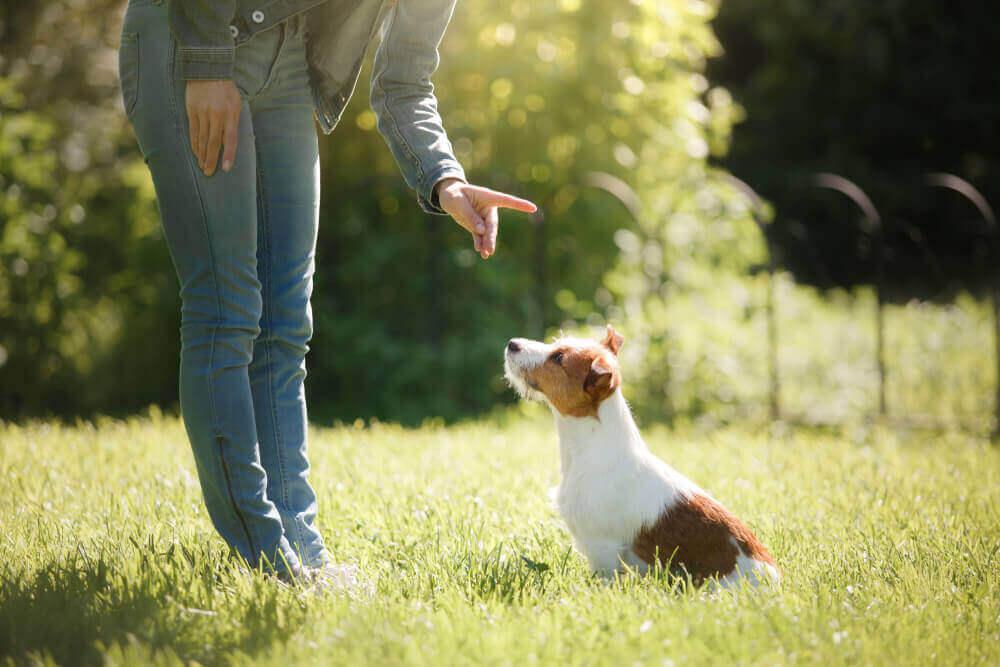 Frau gibt einem Hund Befehle