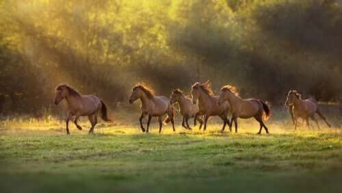 Eine Herde von Pferden galoppiert über eine Wiese