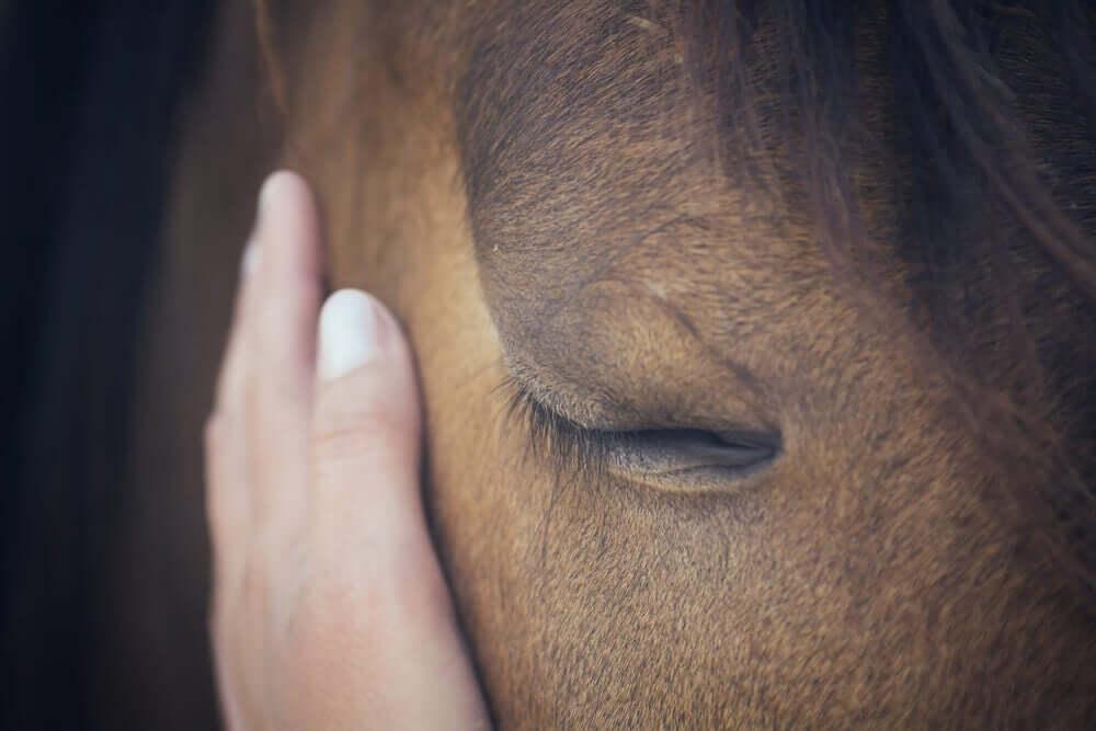 Pferde sind wirklich sehr sensible Wesen