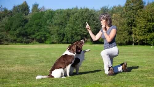Frau erzieht zwei Hunde mit einer Pfeife