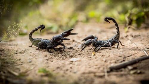 Skorpione - 8 Dinge, die du wissen solltest