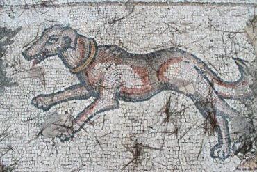 Die ausgestorbenen Hunderassen, die du kennen solltest