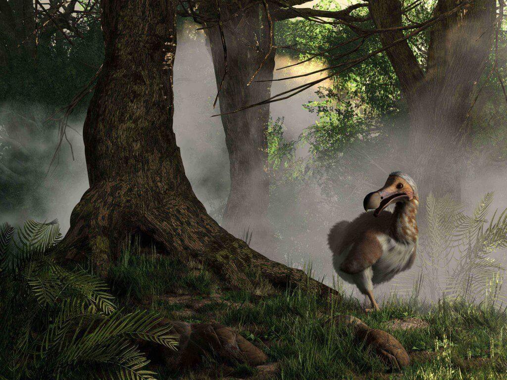 Die Geschichte des Dodos: ein ausgestorbener Vogel