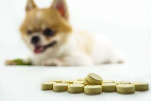 Gelenkgesundheit von Hunden: die besten Ergänzungsmittel