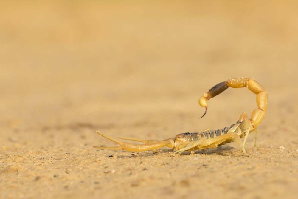 Gift des Skorpions
