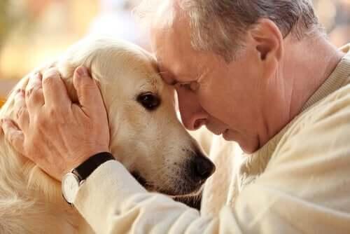 Hunde altern genauso wie Menschen