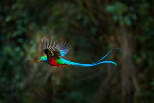 Prachtvoller Vogel im Flug