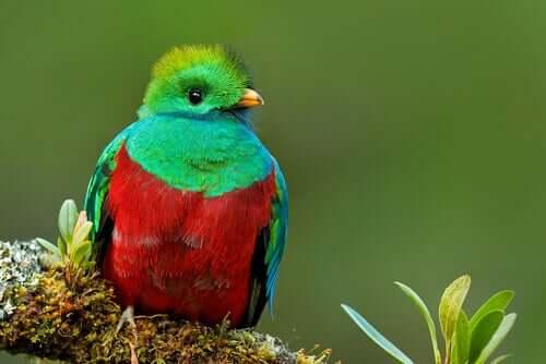 Quetzal: ein wunderschöner, geheimnisvoller Vogel