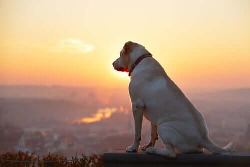 Es ist gar nicht so leicht, sich von einem Haustier zu verabschieden