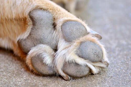 Verletzungen an Hundepfoten