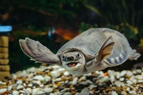 Die Haltung einer Wasserschildkröte