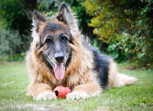 Wie Hunde altern: Alles Wissenswerte und Tipps!