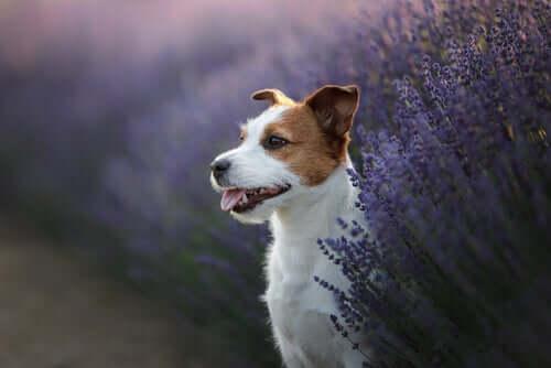 3 Heilpflanzen für die Gesundheit von Haustieren