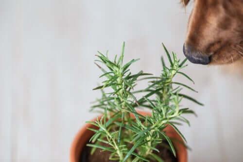 Heilpflanzen für Haustiere