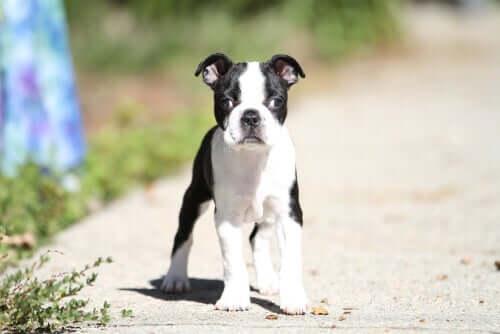 Schielen bei Hunden: Gründe und Behandlungsmethoden