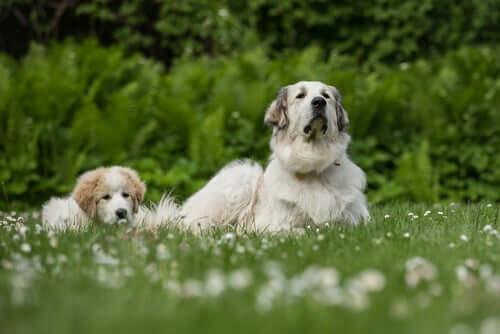 Hunde erkennen ihre Mutter