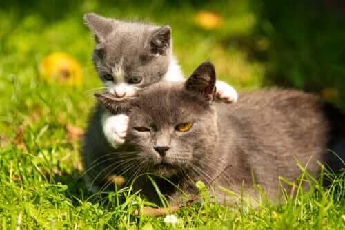 Kätzchen und Frau Mama