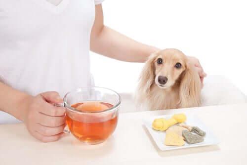 Tee für den Hund