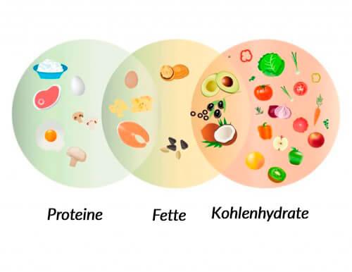 Künstliche Vitamine und Mineralstoffe bei der Hundeernährung