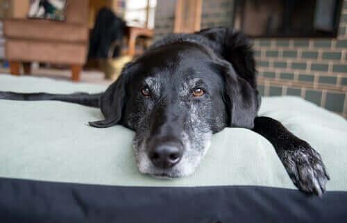 Hund liegt entspannt auf dem Bett